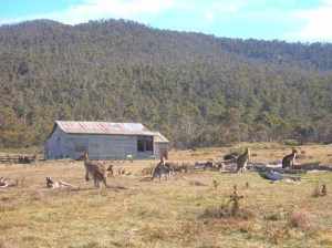 Shearing shed with some of the locals