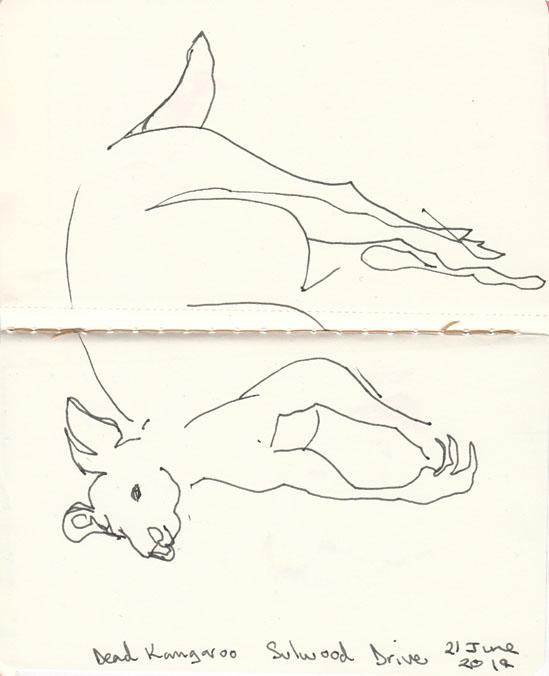 A dead Eastern Grey Kangaroo, pen and ink, 21 June 2014.