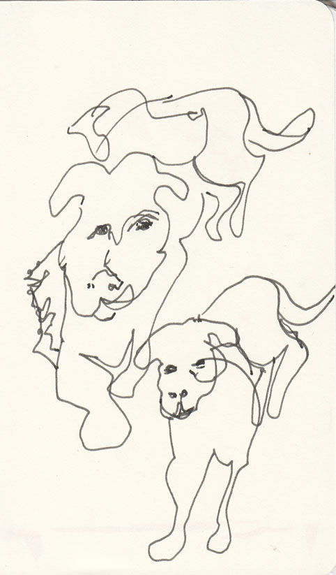 The same dog, several times, pen and ink, 2 July 2014