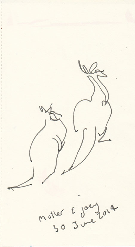 Eastern Grey kangaroos, pen and ink, Mt Taylor, 30 June 2014.