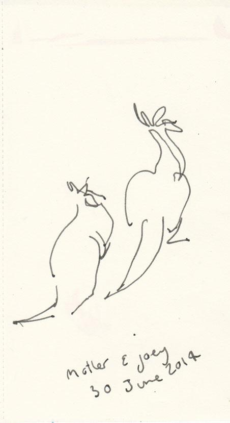 Eastern Grey kangaroos, pen and ink, Mt Taylor, 30 June 2014.