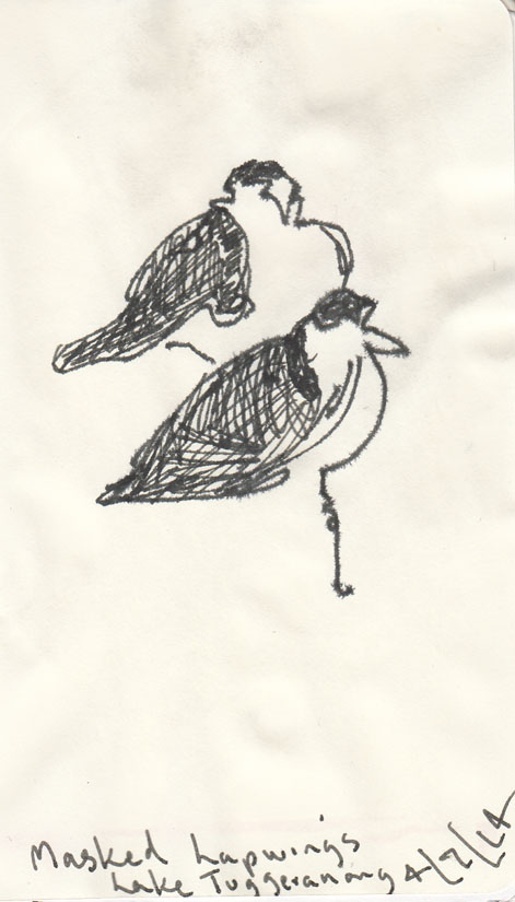 Masked Lapwings, pen and ink on damp paper, 4 July 2014
