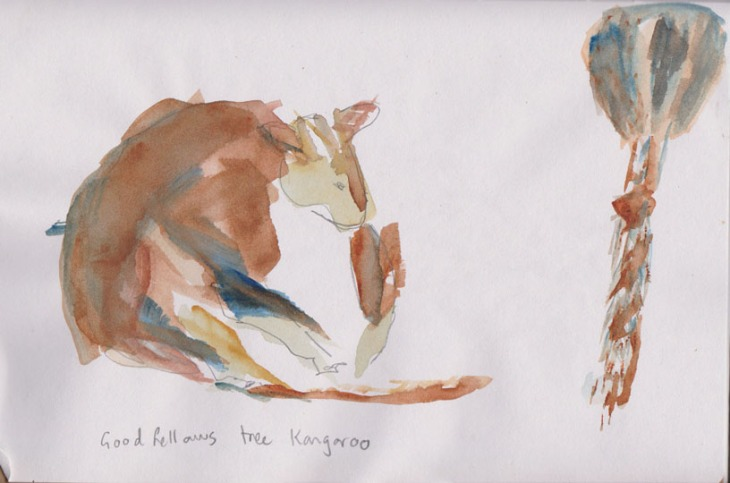 Quite relaxed, a Goodfellows Tree Kangaroo, watercolour, 9 January 2015