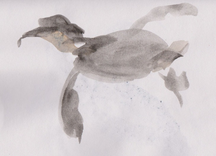 A Little Penguin floating by, watercolour, 9 January 2015