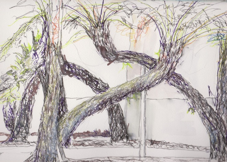 The Fern Garden, designed by Fiona Hall, pen and ink, pencil and watercolour pencil, 8 February 2015