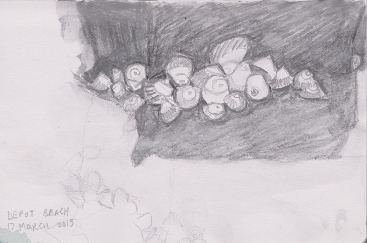 A cluster of Zebra Top Shells, 17 March 2015, graphite