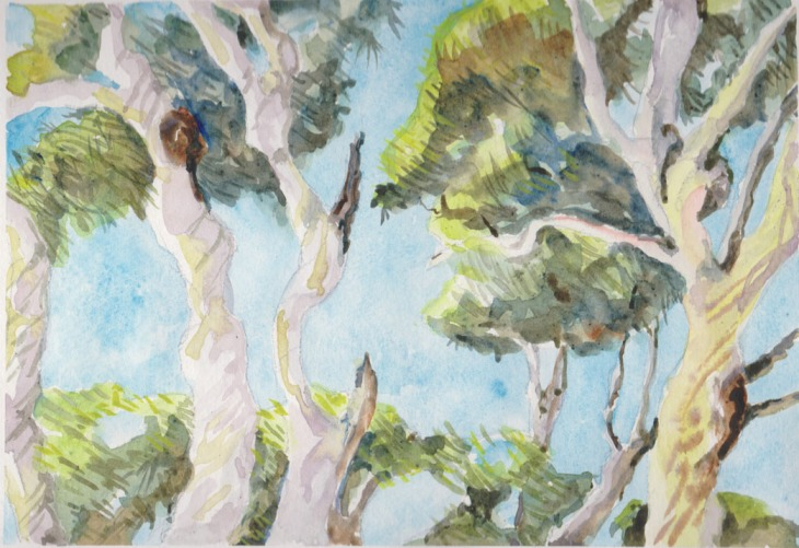 Spotted gums at Depot Beach, 17 March 2015, watercolour and graphite