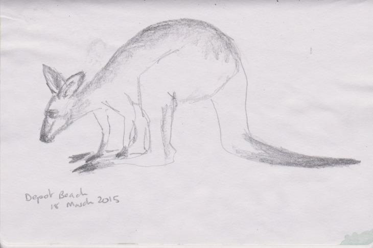 An Eastern Grey kangaroo, graphite, 18 March 2015