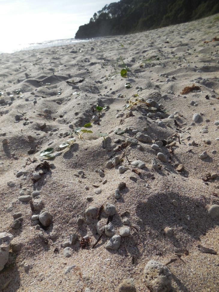 Pumice pebbles on Depot Beach, March 2015