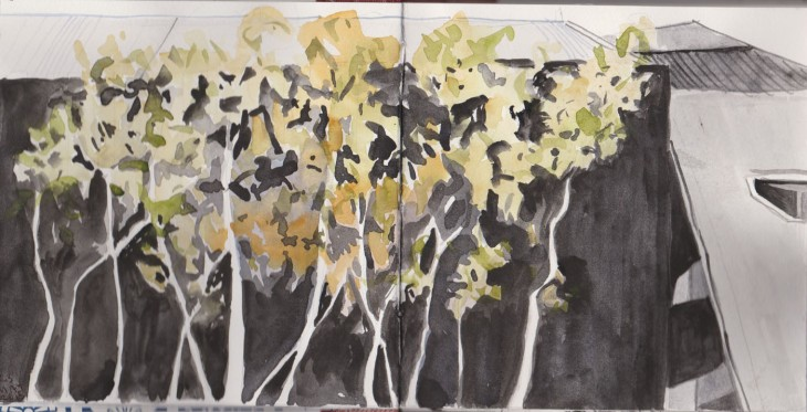 Gum trees in the Garden of Australian Dreams, watercolour and graphite, 23 May 2015