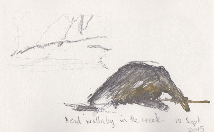 Dead wallaby in the river, watercolour and graphite, 18 September 2015