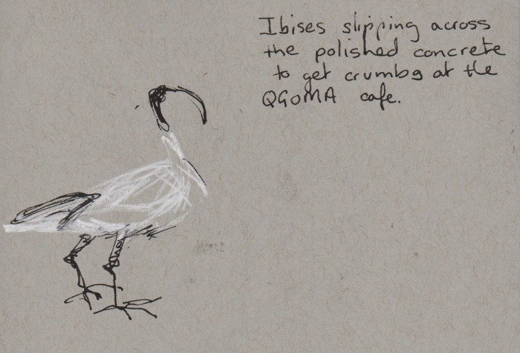 Sacred Ibis, white chalk, pen and ink.