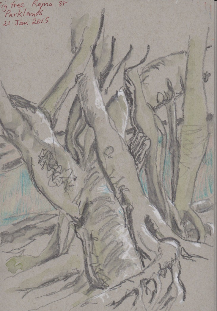 Fig tree, Roma Street Parklands, white chalk, graphite and coloured pencil, 21 January 2016